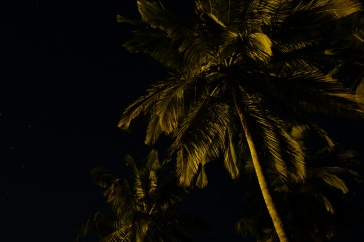 Starkly palm trees of Goa