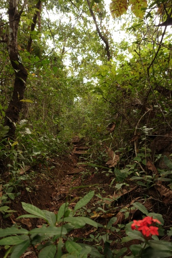 Exploring old tracks in the lush jungle