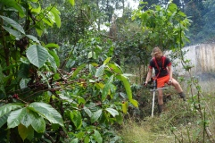 Bush whacking in the coffee plantation