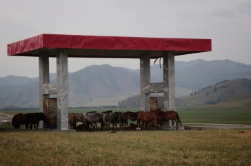 Horses were traded in huge volumes between Chinese dynasties and the Mongols
