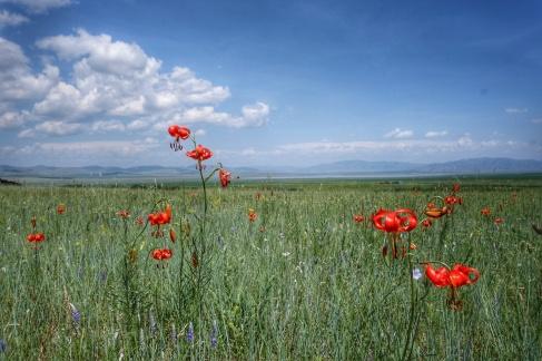 Endless wildflower meadows